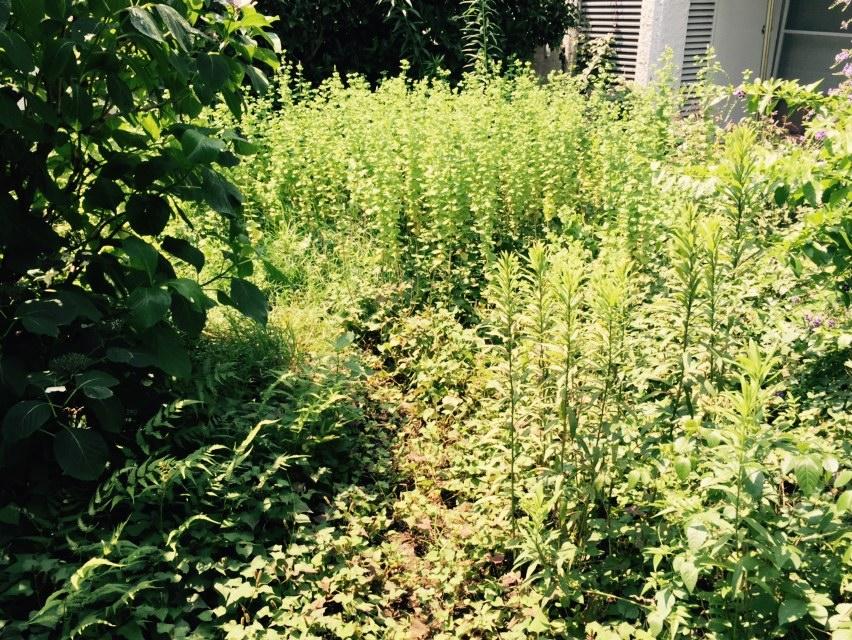 マンション専用庭の除草