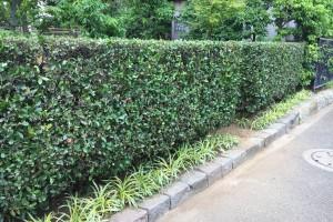 垣根の刈り込み