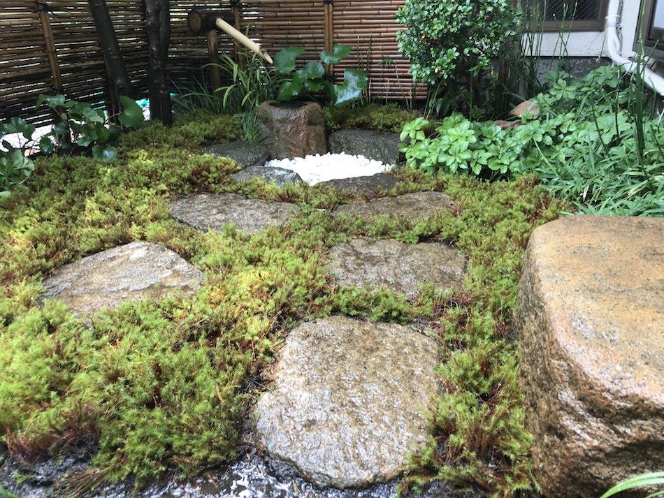 ウマスギゴケ苔庭